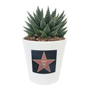 Planta suculenta Walk of Fame