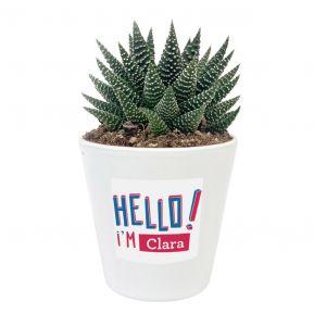 Planta con maceta personalizada HELLO