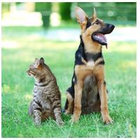 Accesorios personalizados para animales